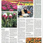 8 Valstiečių laikraščio puslapis